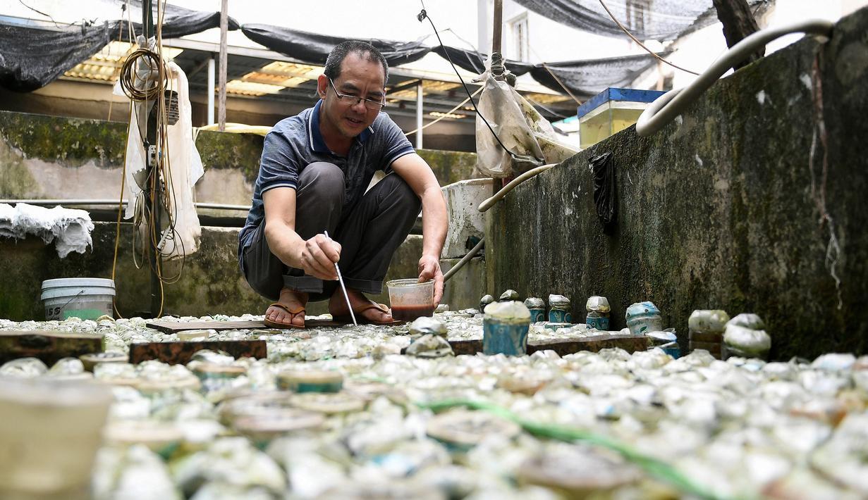 Tran Ngoc Thang memberi makan ikan cupang atau Siamese Fighting Fish yang dibesarkan di dalam botol plastik dan kaca di peternakan ikan hiasnya di Hanoi, Selasa (13/4/2021). Thang menggunakan ribuan botol kaca dan plastik bekas untuk berternak dan mengembangbiakkan ikan cupang. (Nhac NGUYEN/AFP)