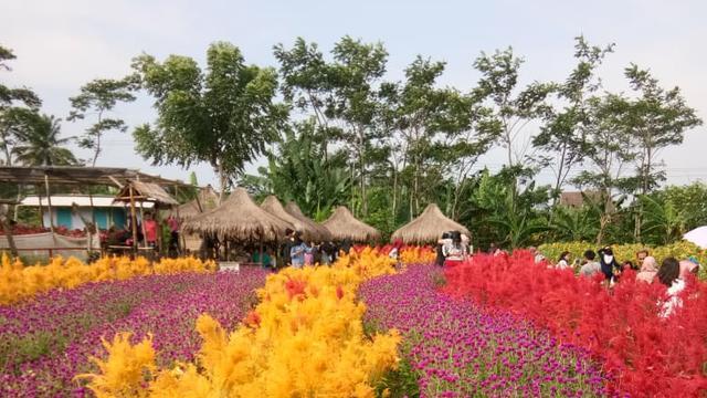 Terpikat Cantiknya Taman Bunga Kadung Hejo Di Pandeglang Lifestyle Liputan6 Com