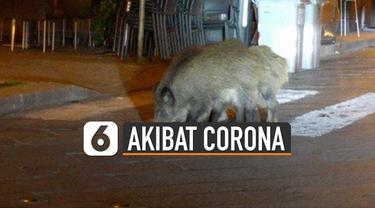 Kehidupan para binatang juga ikut terganggu akibat virus Corona.