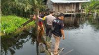 Buaya di Riau mengganas lagi, bocah tujuh tahun diterkam. (Liputan6.com/M Syukur)