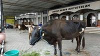 Keluarga Soeharto berkurban satu ekor sapi di Masjid Agung Baitussalam, Purwokerto. (Foto: Liputan6.com/Humas MAB/Muhamad Ridlo)