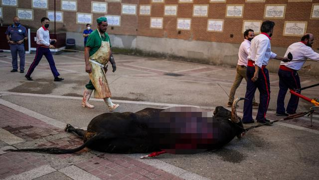 Seekor banteng yang mati diseret keluar dari arena adu banteng Las Ventas, Madrid, Spanyol, Minggu (4/7/2021). Adu banteng ini berlangsung di tengah pandemi virus corona COVID-19. (AP Photo/Manu Fernandez)