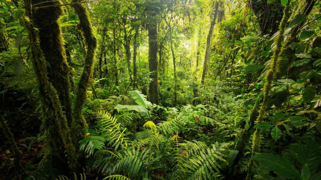 Mengejutkan yang Ditemukan dalam Hutan