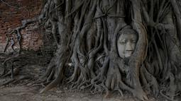 Sebuah kepala patung Buddha terlihat di antara akar pohon di kuil Wat Mahathat, Ayutthaya, Thailand (25/12/2015). Patung ini menjadi daya tarik tersendiri karena tidak ditemukan sisa bagian tubuh di sekitar pohon. (REUTERS/Jorge Silva)