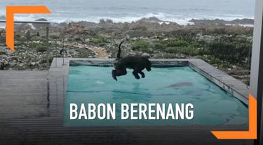 Seorang warga di Afrika Selatan dikejutkan dengan munculnya sepasang babon di kolam renang rumahnya. Lucunya, para babon tersebut begitu asik bermain di kolam. Salah satu aktivitas yang dilakukannya adalah berenang.