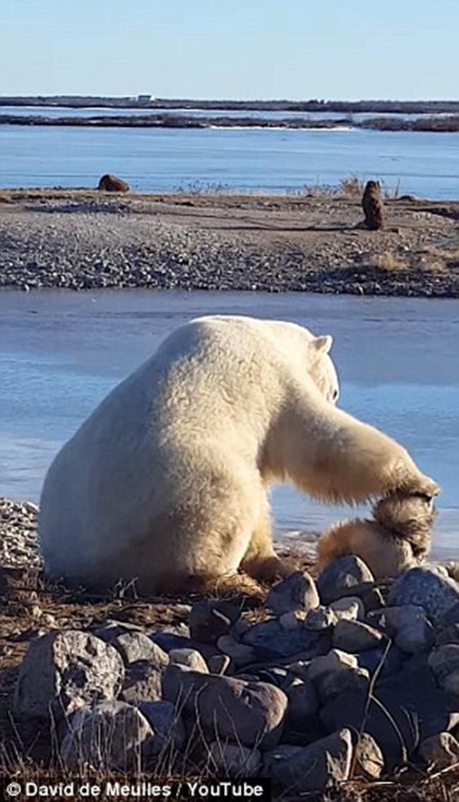 Beruang kutub membelai kepala anjing | Photo: Copyright dailymail.co.uk