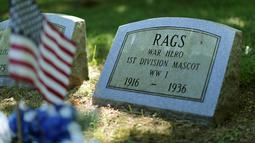 """Nisan untuk """"Rags"""", anjing maskot Perang Dunia I Divisi 1 Angkatan Darat terlihat di Memorial Park di Aspen Hill, Maryland, 25 Agustus 2015. Didirikan sejak tahun 1921, lebih dari 50.000 hewan dimakamkan di tempat ini. (REUTERS/Gary Cameron)"""