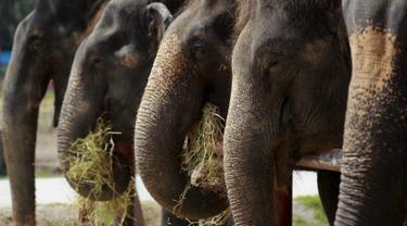 20150811-Hari-Gajah-Dunia-Thailand