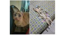 Kucing lucu (Sumber: Twitter/@twitkocheng)