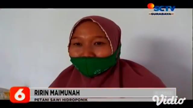 Memanfaatkan lahan pekarangan rumah, ibu-ibu di Kecamatan Tembelang, Jombang, Jawa Timur, menciptakan usaha rumahan yakni, budi daya tanaman hidroponik, khususnya sawi bisa dijual berupa sayur mentah dan jus.