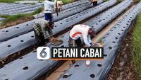 TV Petani