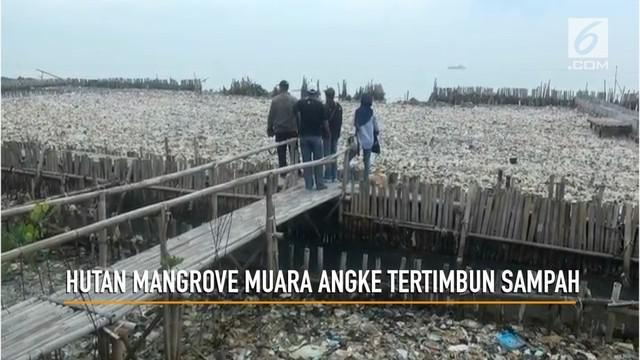 Timbunan sampah menutup hutan mangrove di kawasan Muara Angke Jakarta Utara. Selain it smpah juga menutup tambak Bandeng swadaya mirip masyarakat