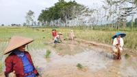 Potensi pertanian Pekalongan masih sangat besar untuk dapat ditingkatkan khususnya masalah ketersediaan air bisa diatasi.