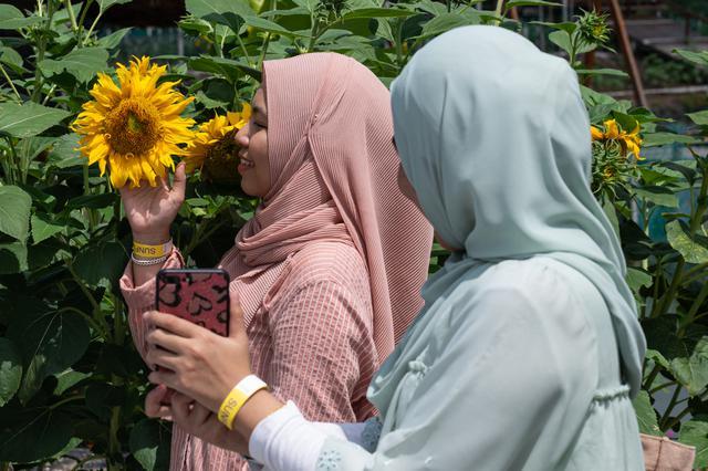 Wanita muslim berfoto dengan bunga matahari di taman bunga matahari di Bagan Datuk di negara bagian Perak Malaysia (17/3/2021). Ratusan pengunjung datang ke taman ini setiap hari untuk foto dan menikmati aktivitas lain seperti memberi makan ikan dan itik yang terdapat di taman tersebut. (AFP/Mohd Ra