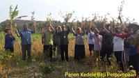 Panen Kedelai di Bulak Beji Patuk Kabupaten Gunungkidul, Daerah Istimewa Yogyakarta.