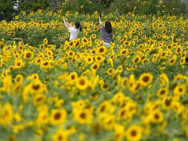 Pengunjung memakai masker sebagai pencegahan virus corona, memegang smartphone di ladang bunga matahari saat istirahat makan siang di Paju, Korea Selatan, Kamis (1/7/2021).  Ratusan bunga matahari mekar di sebuah taman di Paju, Korea Selatan. Warga pun menikmati keindahannya. (AP Photo/Lee Jin-man)
