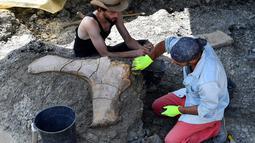 Peneliti National History Museum of Paris membersihkan tulang panggul didekat penemuan tulang paha dinosaurus raksasa Sauropoda di sebuah situs penggalian di barat daya Prancis, 24 Juli 2019. Tulang-tulang tersebut ditemukan pada lapisan tanah liat yang tebal oleh tim relawan. (GEORGES GOBET/AFP)