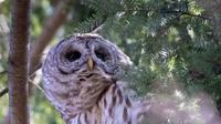 Barry, burung hantu yang menjadi ikon Central Park New York tewas ditabrak truk (dok.Instagram/@centralparknyc/https://www.instagram.com/p/CSPebRHnIZR/Komarudin)