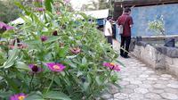 Bunga-bungaan dan tanaman liar untuk mengundang serangga penyerbuk misalnya lebah dalam pertanian terintegrasi di Ponpes Rubat Mbalong Ell Firdaus. (Foto: Liputan6.com/Muhamad Ridlo)