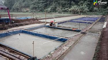 Deretan kolam ikan Koi, milik Kelompok Budidaya Ikan (Pokdakan) ikan koi, Kecamatan Cipaku, Kabupaten Ciamis, Jawa Barat.