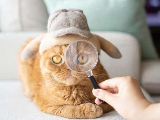 004801600 1565915985 hair cat hats ryo yamazaki 10 5d53d13553a4d  700