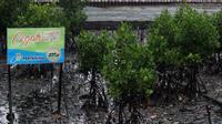 Tanaman mangrove di kawasan Margasari, Balikpapan, Kalimantan Timur, terkena imbas tumpahan minyak mentah milik Pertamina. (Liputan6.com/Abelda Gunawan)