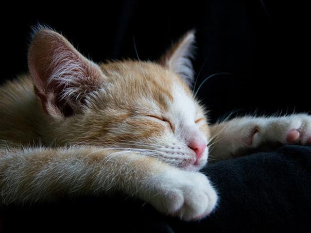 Bukan Pemalas Ini Alasan Mengapa Kucing Anda Selalu Tidur Global Liputan6 Com