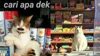 Kucing jaga warung (Sumber: Twitter/riyadi_ardyan/blestallure)