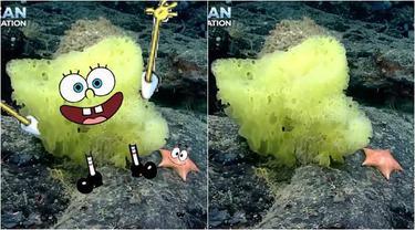Viral Penemuan SpongeBob dan Patrick Oleh Ilmuwan Laut Ini Mirip Seperti di TV