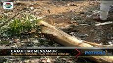 Amukan gajah-gajah liar tersebut menewaskan satu orang warga Desa Durian Sembilan.