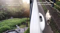 Kisah haru anjing ditinggal (Sumber: TikTok/so.bangcha)