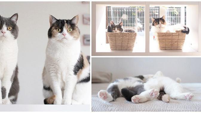 Kucing Bersaudara Ini Kompak Seperti Anak Kembar Lifestyle Fimela Com