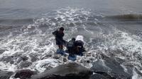 lumba-lumba terdampar di bali