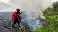 Pemadaman kebakaran hutan di wilayah Taman Nasional Rawa Aopa, Minggu (31/1/2021).(Liputan6.com/Ahmad Akbar Fua)