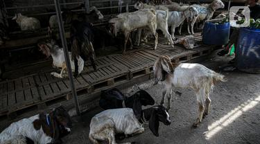 PPKM Darurat, Penjualan Hewan Kurban Menurun