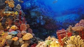 Ciri-Ciri Porifera, Klasifikasi, dan Contohnya dalam Ilmu Biologi