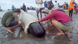 Sekelompok sukarelawan berusaha menyelamatkan sekitar 100 paus yang masih hidup, dari 400-an paus yang terdampar di ujung dari Pulau Selatan, tepatnya di area Farewell Spit, Selandia Baru, Jumat (10/1). (TRACY NEAL/RADIO NEW ZEALAND/AFP)