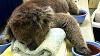 Kebakaran hutan di Australia menghacurkan habitat koala dan mengancam keberlangsungan hidup hewan ini. (sumber: BBC)