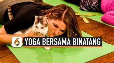"""Berbagai penelitian terbaru menunjukkan sekitar 36 juta warga AS rutin melakukan yoga, termasuk untuk mengurangi stres. Belakangan kegiatan ini dilakukan sambil berinteraksi dengan binatang yang juga bisa kurangi stres, diantaranya kegiatan """"cat yoga..."""