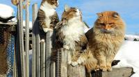 Berawal dari mempelihara kucing, sekarang wilayah ini dipenuhi oleh jutaan mamalia berbulu berkaki empat ini. (Source : Alla Lebedeva)