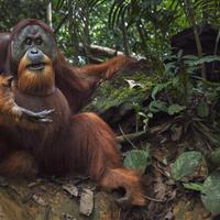 kampanye hari spesies langka 2016, 17 hewan dinyatakan diambang kepunahan (foto : time.com)