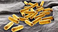 Dalam pengujian pada pada jaringan-jaringan yang ditumbuhkan di laboratorium, cara ini memusnahkan sekitar 92% bakteri kebal antibiotik.