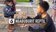 reptil ngabuburit thumbnail