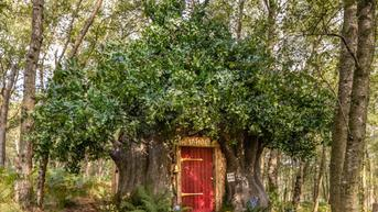 Rumah Pohon Mirip Milik Winnie The Pooh Disewakan, Tamu Diizinkan Tidur Siang Lama