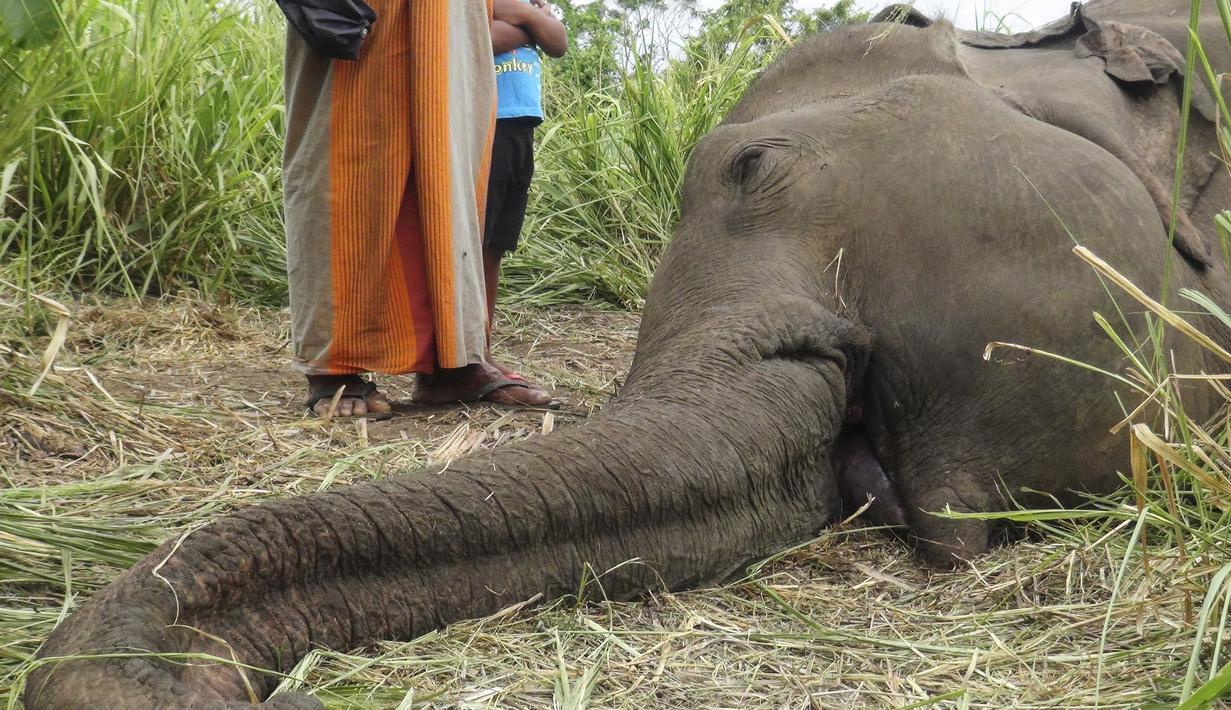 Mayat Gajah terlihat terbaring di ladang dekat desa Sigiriya, sekitar 177 km utara ibukota Kolombo (27/9/2019). Empat gajah ditemukan tewas pada 27 September di Sri Lanka tengah, dengan polisi mencurigai binatang tersebut diracun penduduk desa yang marah. (AFP/STR)