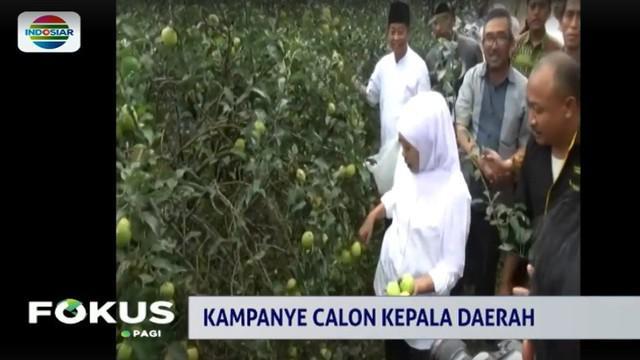 Petani meminta agar Khofifah dapat membantu menyelesaikan persoalan harga dan promosi Apel Tutur.
