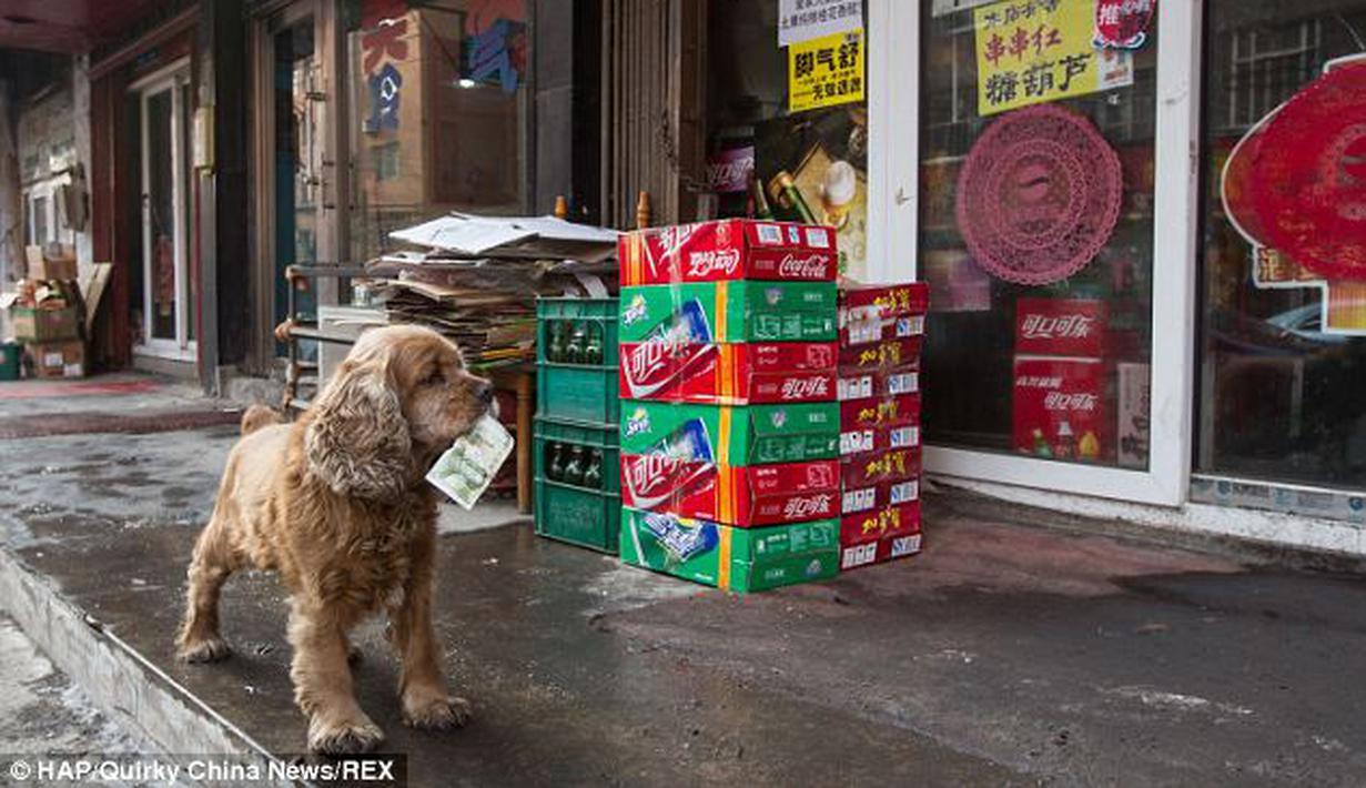 Anjing Lucu Bisa Cari Uang Dan Belanja Sendiri - Fashion ...