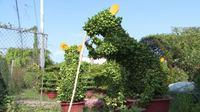 Pohon Bonsai Berbentuk Tikus di Vietnam. (dok. Facebook Vietnam English Teacher/https://www.facebook.com/103884807765663/photos/pcb.126610478826429/126609245493219/?type=3&theater/Adhita Diansyavira)