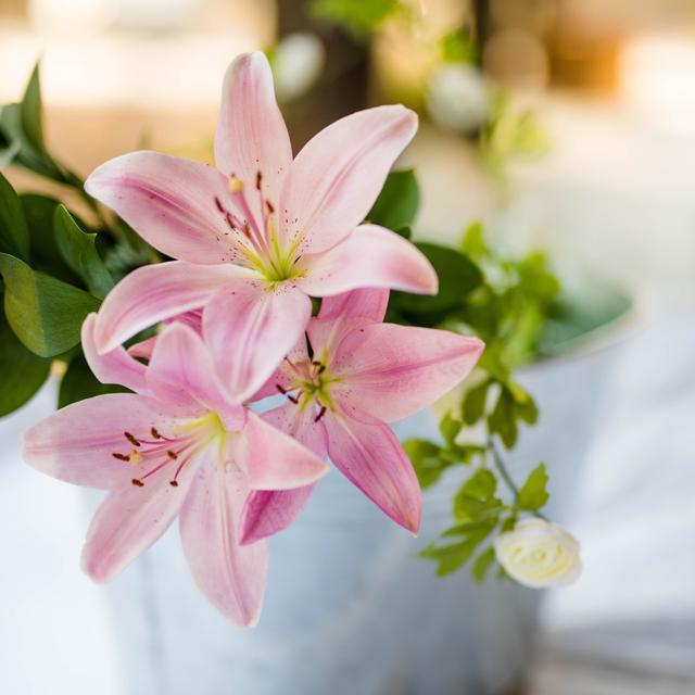 Mengungkap Kepribadian Perempuan Penyuka Bunga Lily Lifestyle