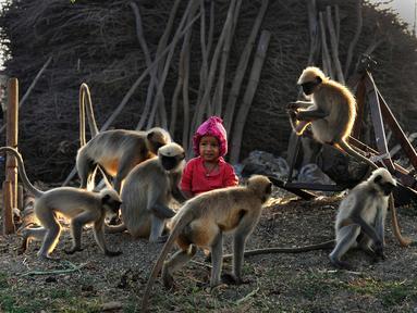 Dalam foto yang diambil 8 Desember 2017, Samarth Bangari (2) duduk di antara kumpulan monyet di sebuah ladang dekat rumahnya di Allapur, India. Karena perkawanan yang tak lazim itu, kini Bangari dijuluki sebagai Mowgli di dunia nyata (Manjunath KIRAN/AFP)